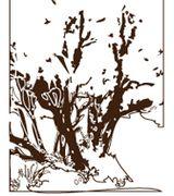 Profile picture for Madroño Landscape Design Studio, Inc.