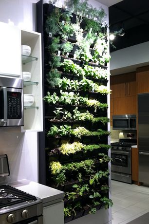 Modern Kitchen with Vertical garden, Limestone counters, Ms international - gray soapstone, European Cabinets, Living wall