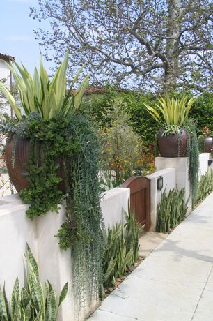 Mediterranean Landscape/Yard with Succulents, Exterior entrance