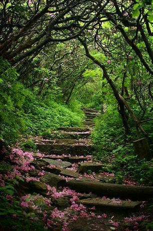 Rustic Landscape/Yard with Dandy Man Pink Rhododendron, Pathway