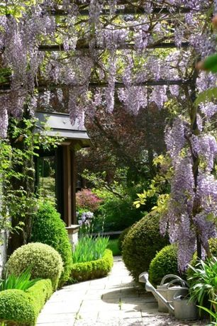 Traditional Landscape/Yard with New england arbors lakewood 6-1/2 ft. x 6-1/2 ft. cedar colored vinyl pergola, Wisteria