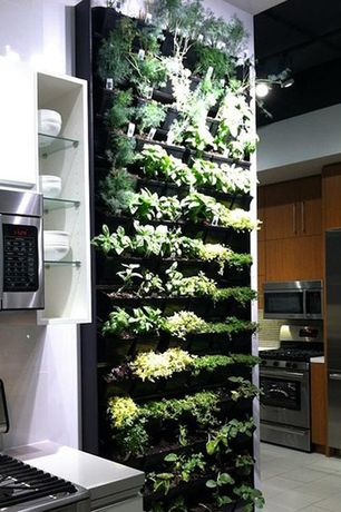 Contemporary Kitchen with built-in microwave, Solid surface countertop, Standard height, European Cabinets, Living wall