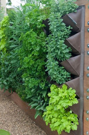 Modern Landscape/Yard with Raised beds, Burpee Strawberry, Alpine Alexandria, 4 in. Mint-Spearmint, Herb garden wall