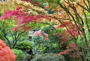 Asian Landscape/Yard