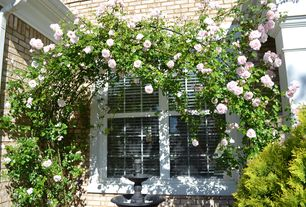 Traditional Landscape/Yard with Roses, Divided double hung window, Brick exterior