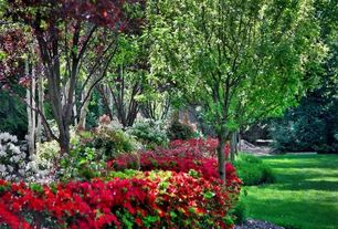 Country Landscape/Yard with White Rhododendron