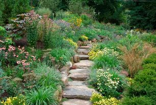 Traditional Landscape/Yard with American Meadows Echinacea White Swan, Holland Bulb Farms Autumn Joy Sedum, Pathway