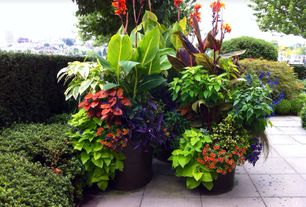 Tropical Landscape/Yard with Red Futurity Canna Lily, Bengal Tiger Canna Lily, exterior stone floors, container garden, Fence