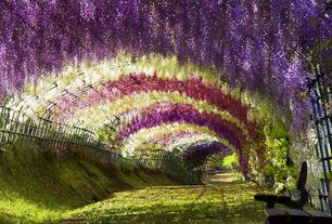 Cottage Landscape/Yard with Wisteria tunnel at kawachi fuji gardens japan