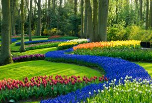 "Traditional Landscape/Yard with Eden Brothers Grape Hyacinth Bulbs (Muscari) - ""Armeniacum"""