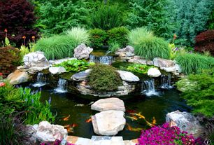 Asian Landscape/Yard with Garden water feature, Koi pond, Perry's Magnificant Pink Hardy Water Lily, Natural stone, Pond