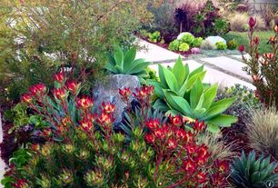 Contemporary Landscape/Yard with exterior stone floors, Large Succulent Campfire Plant, 1 gal. Dragons Blood Stonecrop Plant