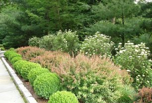 Traditional Landscape/Yard with Pathway, Dwarf English Boxwood, exterior tile floors