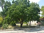 131 Dean St, San Antonio, TX
