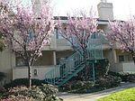 Sunnyhills Ct, Milpitas, CA