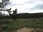 954 Nowata Dr, Red Feather Lakes, CO