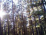 Golden Lane, California Pines, CA