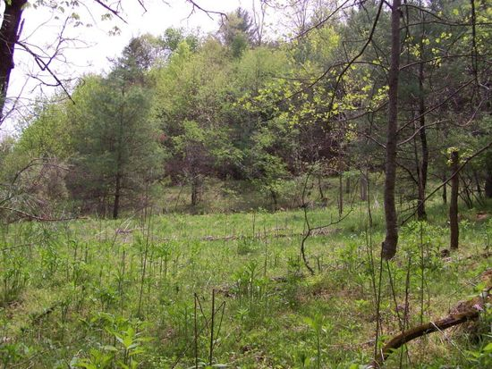 #1 Pine Mountain Road #DIXIE ROAD, Independence, VA 24348