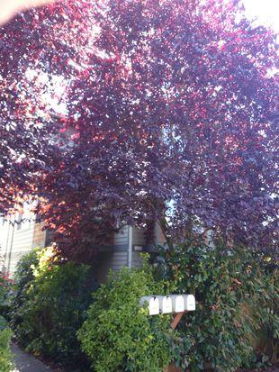2651 NW 57th St # A, Seattle, WA 98107