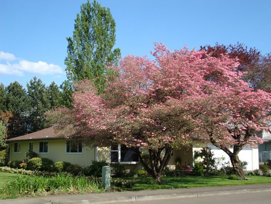 970 N Birch St, Canby, OR 97013