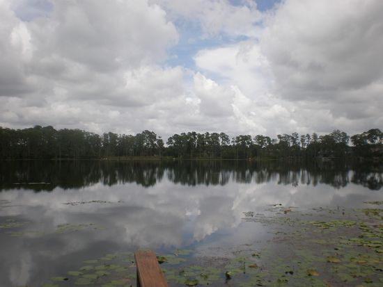 10113 Canopy Tree Ct, Orlando, FL 32836