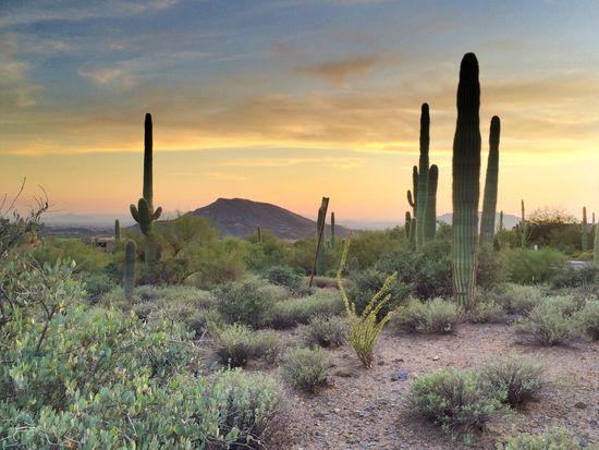 41819 N Saguaro Forest Dr # 105, Scottsdale, AZ 85262