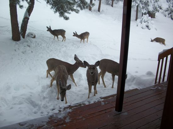 120 Rams Horn Mountain Ct, Livermore, CO 80536