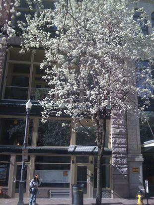 941 Penn Ave APT 201, Pittsburgh, PA 15222