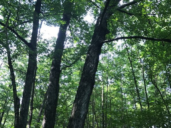 null bed null bath Vacant Land at 0 Smoky Shire Ln Cross Junction, VA, 22625 is for sale at 69k - 1 of 3