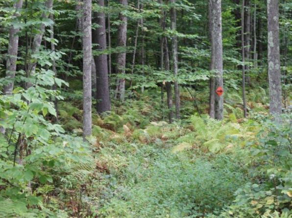 null bed null bath Vacant Land at 00 Birch Hill Rd Meredith, NH, 03253 is for sale at 39k - 1 of 11