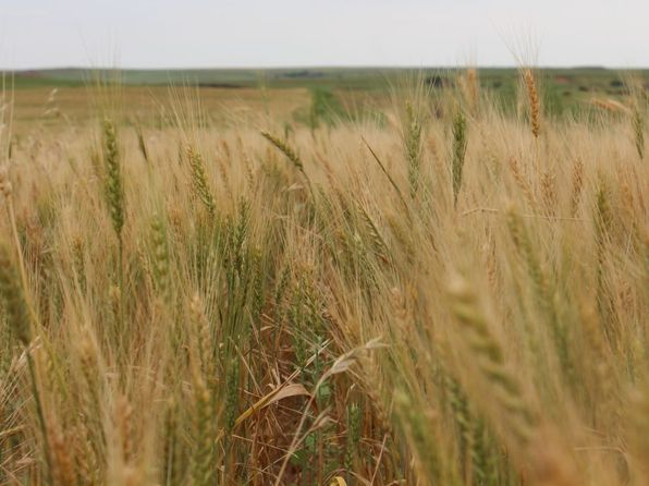 null bed null bath Vacant Land at 2 Cr Woodward, OK, 73801 is for sale at 311k - 1 of 40