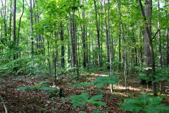 null bed null bath Vacant Land at  Sonja Way Way Clarkrange, TN, 38553 is for sale at 43k - google static map