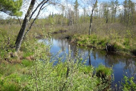 0 bed null bath Vacant Land at L2 Coffin Brook Rd Alton, NH, 03809 is for sale at 100k - google static map